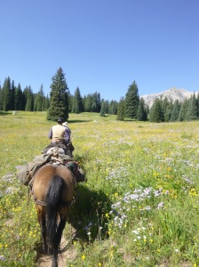On our ride on Saturday [my birthday].  We got to see so many beautiful wild flowers!!